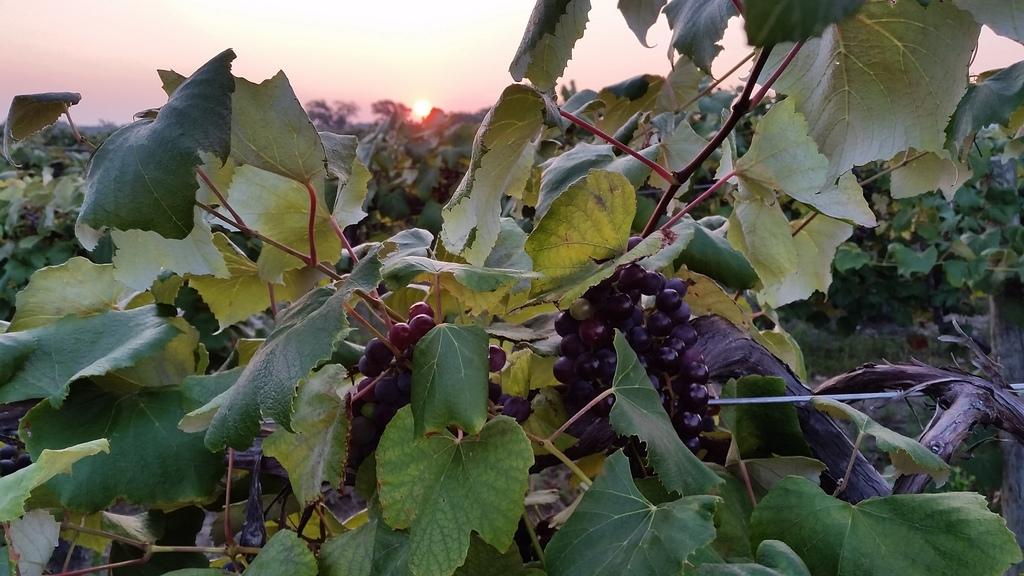 September Harvest 2015 in Lake Erie Region