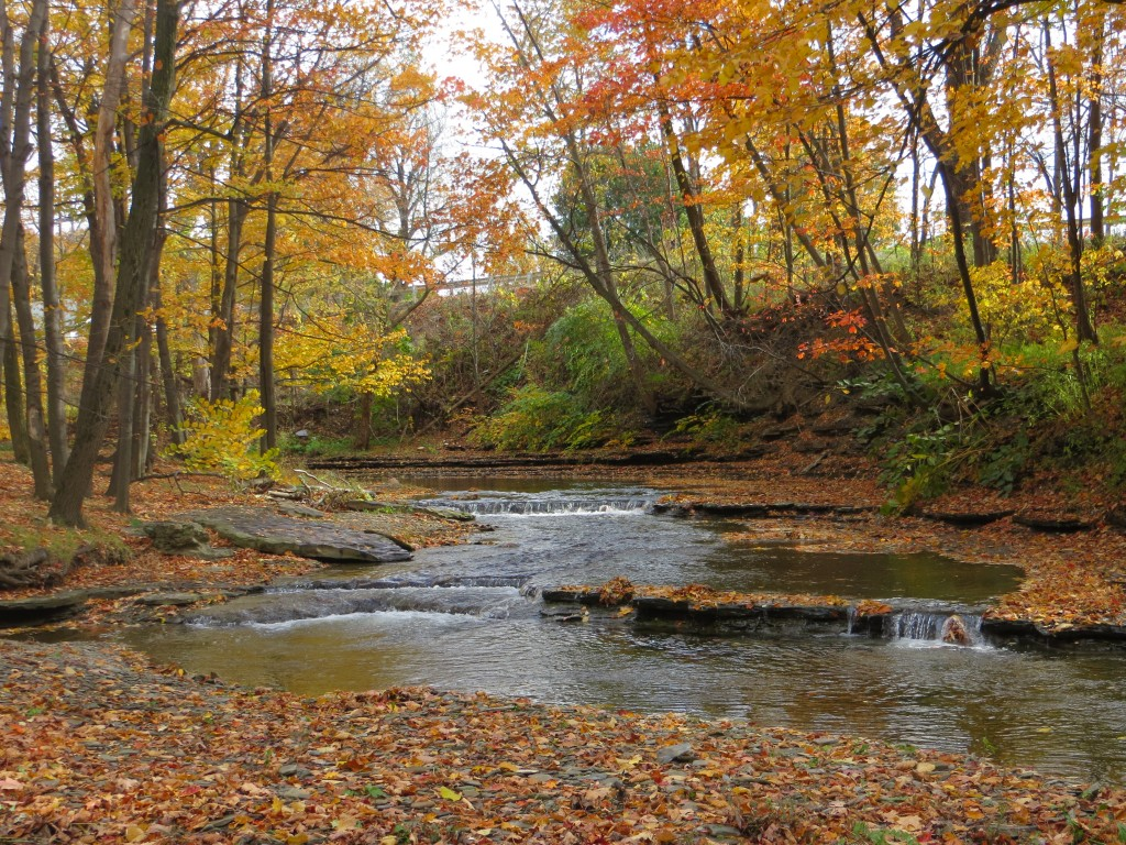 Creekside Fall Photo