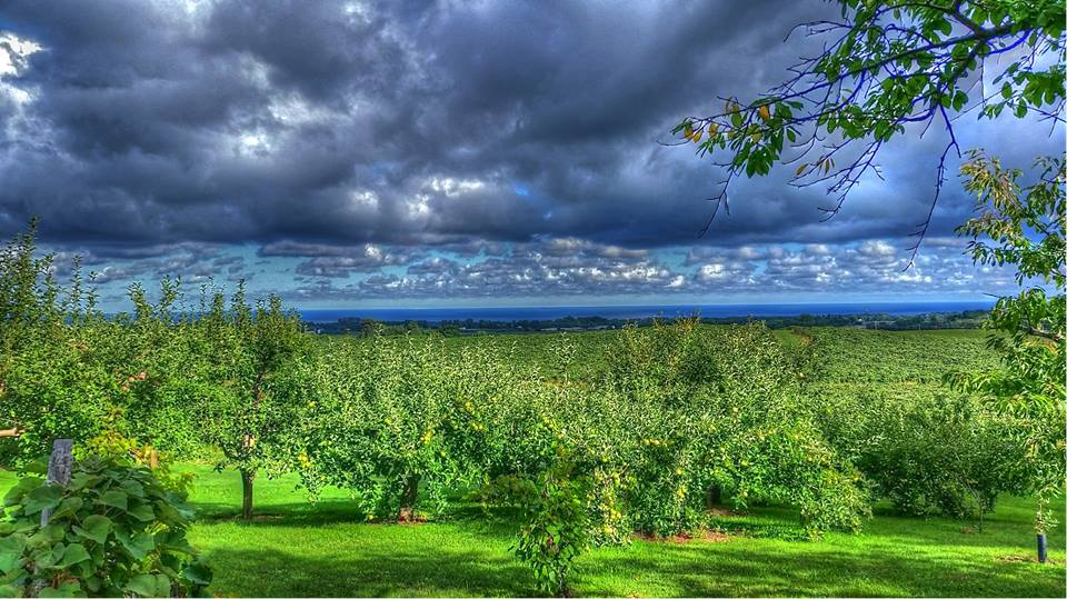 Rassie farm with Apple trees, Blueberries and vineyards overlooking Lake Erie